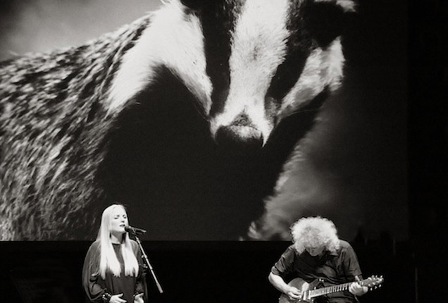 Brian May Badger