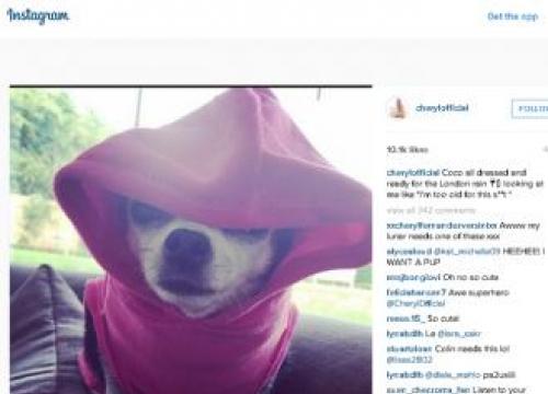 Cheryl Fernandez-versini's Rain-proofed Dog