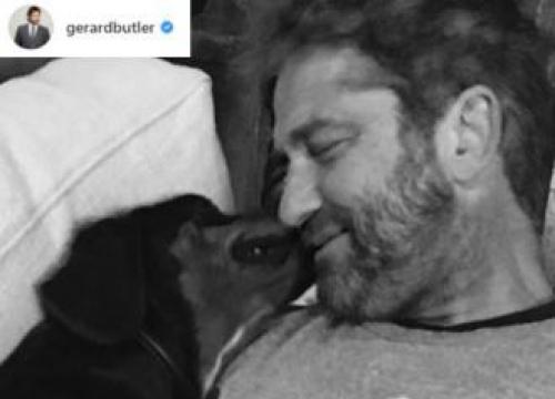 Gerard Butler Adopts Stray Dog