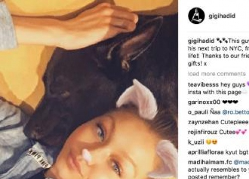 Gigi Hadid Adopts New Pooch