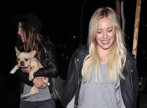 Hilary Duff And Lance Bass Urge Fans To Help Find Missing Dog