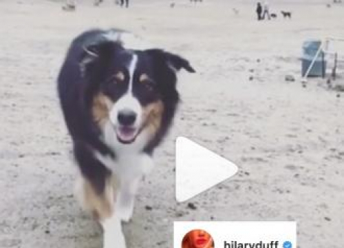 Hilary Duff's Dog Has Died
