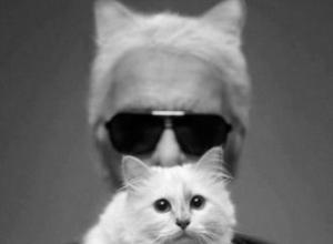 Karl Lagerfeld's cat earns £2m