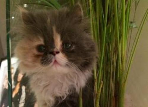 Perrie Edwards' Pet Cat Has Died