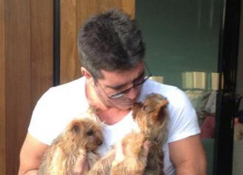 Simon Cowell's Dog Thinks She's A Boy