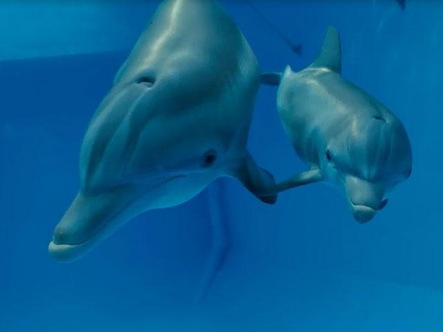 Dolphin Tale 2 Trailer