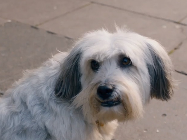 Pudsey The Dog: The Movie Trailer