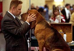 Best In Show Movie Still