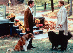 Dog Park Movie Still