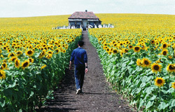 Everything Is Illuminated Movie Still