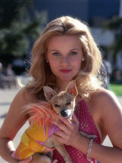 Legally Blonde Movie Still
