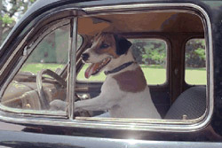 My Dog Skip Movie Still