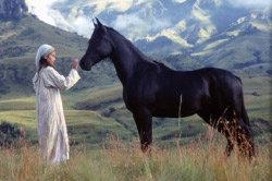 The Young Black Stallion Movie Review