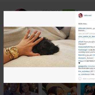 Demi Lovato Gets New Puppy
