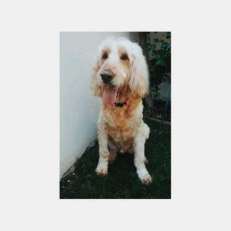 Chloe Grace Moretz's dog dies