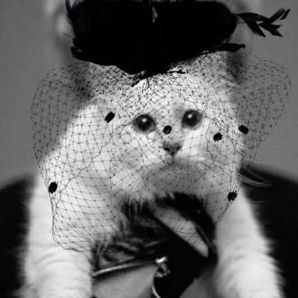 Choupette Lagerfeld 'in mourning' for Karl following death