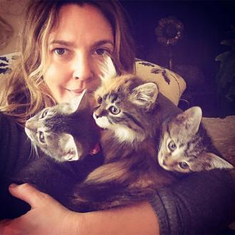 Drew Barrymore Is 'Crazy Cat Lady'