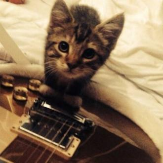 Ed Sheeran's Cat Has Died