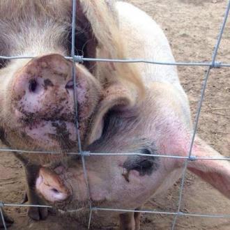 Elizabeth Hurley's Porky Problem