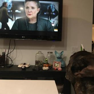 Carrie Fisher's dog watches Star Wars: The Last Jedi trailer