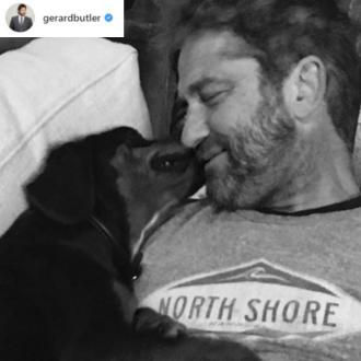 Gerard Butler adopts stray dog