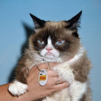 Internet Famous Grumpy Cat Dies