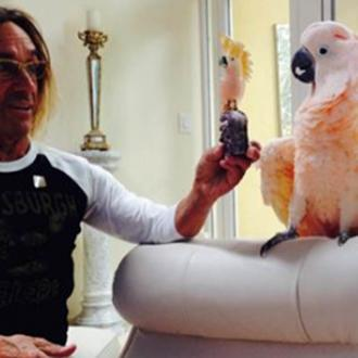 Iggy Pop's cockatoo Biggy Pop becomes Byron Bay Wildlife Hospital patron
