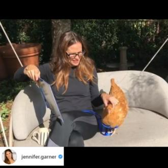 Jennifer Garner's chicken dead