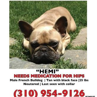 Jeremy Renner Offers 5k Reward For Missing Dog