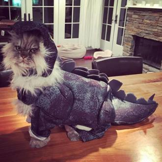 Kate Beckinsale turns cat into dinosaur