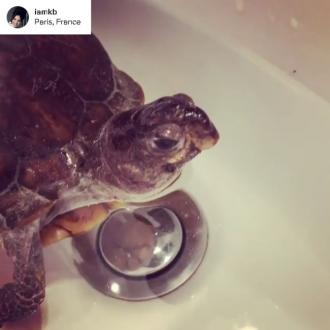 Kelly Brook wakes pet turtle from hibernation
