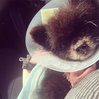 Kelly Osbourne's Dog Undergoes Surgery