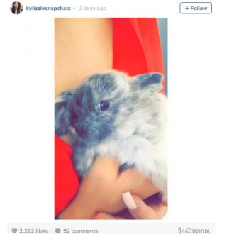 Kylie Jenner Gets Bunny Called Bruce