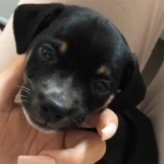Kylie Jenner adopts puppy