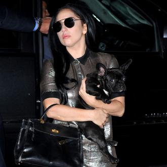 Lady Gaga Blasted By Animal Charities