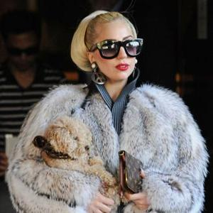 Lady Gaga Defends Decision To Wear Fur