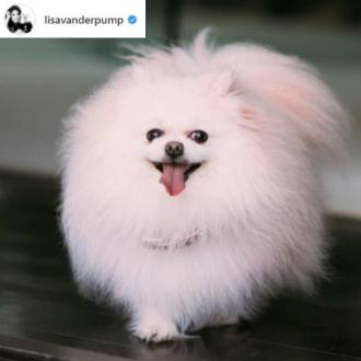 Lisa Vanderpump's dog dies