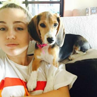 Miley Cyrus Adopts Dog
