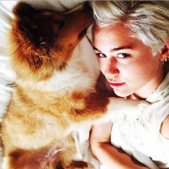 Miley Cyrus Gets New Puppy