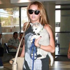 Miley Cyrus Adopts Stray Puppy