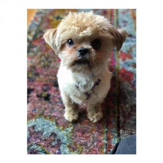Olivia Wilde adopts puppy