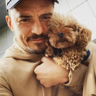 'My heart is already broken': Orlando Bloom's dog Mighty goes missing