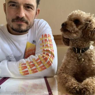 'I feel powerless': Orlando Bloom's dog has gone missing