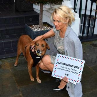 Pamela Anderson calls for end to 'inhumane' dog killing in Mauritius