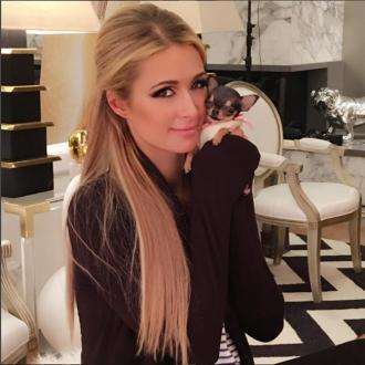Paris Hilton Gets New Chihuahua Puppy