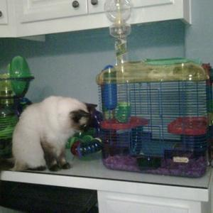 Paris Hilton Buys Hamster House