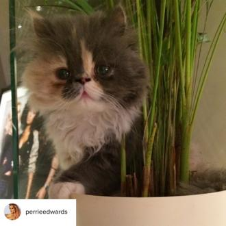 Perrie Edwards' pet cat has died