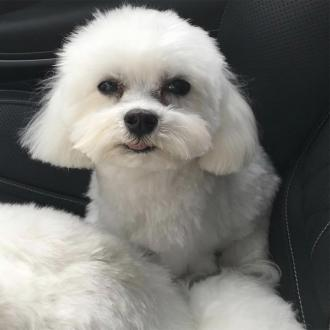 Ray J Offers $20k Reward After Dog Is 'Kidnapped'