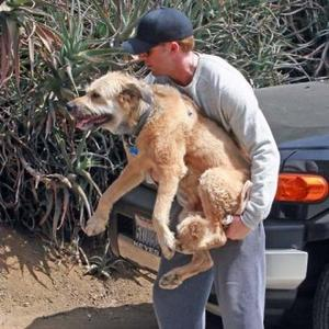 Ryan Gosling Cradles Canine From Canyon To Car