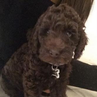 Ariana Acquires New Dog Called Sirius Black